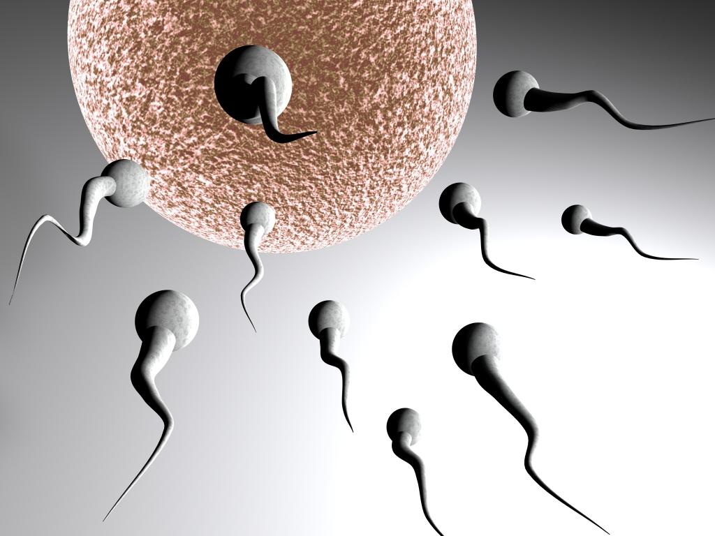 Période d ovulation